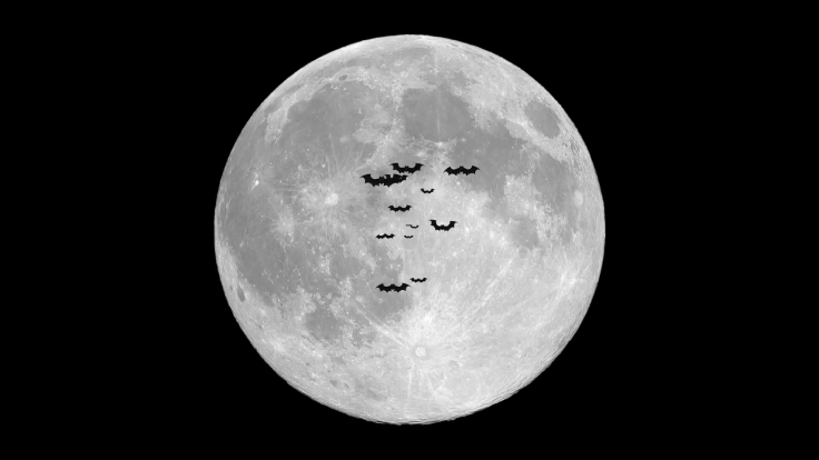 halloween-sale-with-moon-and-bats_ey5fspat__f00006548282609905001404.png