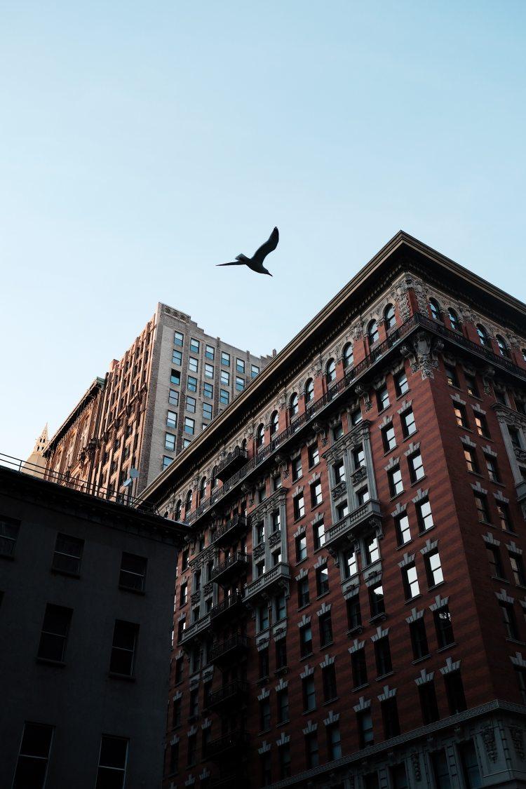 apartment-apartment-buildings-architecture-2170687.jpg