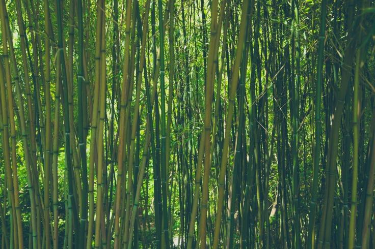 bamboo-828703_1920